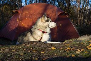 dog camping tips